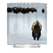 Alpha Male Bison Shower Curtain