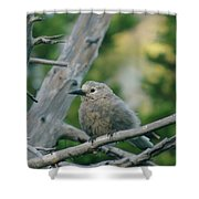 Alpine Camp Robber Shower Curtain