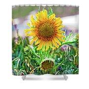 Alpine Sunflower In Summer Shower Curtain