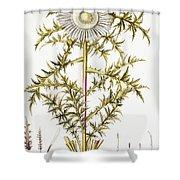 Alpine Thistle Shower Curtain