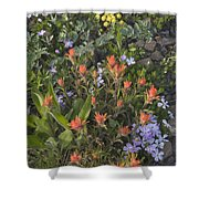 Alpine Wildflowers Hurricane Ridge 4031 Shower Curtain