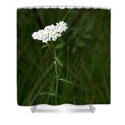 Alpine Yarrow Wildflower 2 Shower Curtain