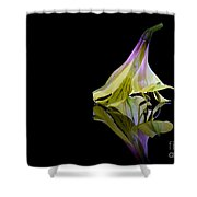 Alstroemeria Blossom Shower Curtain