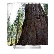 Alta Vista Giant Sequoia Shower Curtain