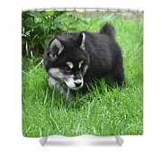 Alusky Puppy Dog Spotting A Toy To Play With Shower Curtain