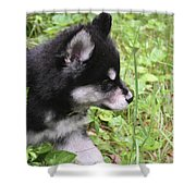 Alusky Puppy Tip Toeing Through Green Foliage Shower Curtain