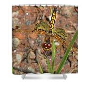 Amanda's Pennant Dragonfly Female Shower Curtain