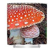 Amanita Muscaria - Red Mushroom Shower Curtain