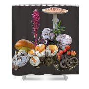Amanitas 2 Shower Curtain