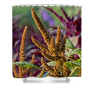 Amaranth- Two Shower Curtain
