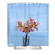 Amaryillis Belladonna Against The Spring Florida Sky Shower Curtain