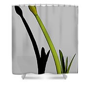 Amaryllis And Shadow Shower Curtain
