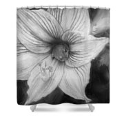 Amaryllis And Tree Frog Painted Bw Shower Curtain