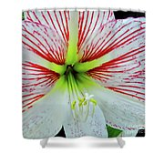 Amaryllis Beauty Shower Curtain