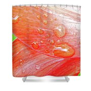 Amaryllis Dew Drops Shower Curtain