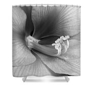 Amaryllis Flower Bloom In Black And White Shower Curtain