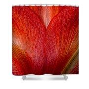 Amaryllis Flower Petals Shower Curtain