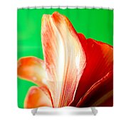 Amaryllis Head Pt Orange Amaryllis Flower On Green Background Shower Curtain