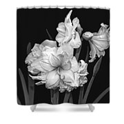 Amaryllis In Black And White Shower Curtain