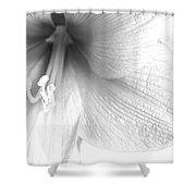 Amaryllis In White Shower Curtain