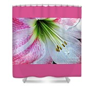 Amaryllis - Lily Shower Curtain
