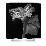 Amaryllis, Monochrome Shower Curtain