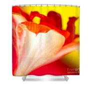 Amaryllis Shadow Abstract Flower With Shadow On Red And Yellow Shower Curtain