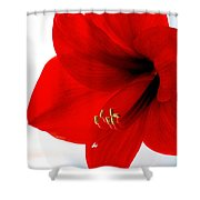 Amaryllis Square Shower Curtain