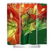 Amaryllis Triptych Shower Curtain