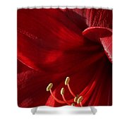 Amaryllis6790 Shower Curtain