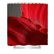 Amaryllisleaves6698 Shower Curtain
