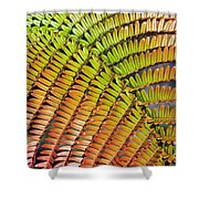Amaumau Fern Frond Shower Curtain
