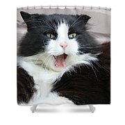 Amazement Cat Timothy Shower Curtain
