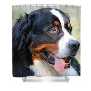 Amazing Bernese Mountain Dog Shower Curtain