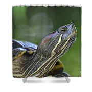 Amazing Close-up Painted Turtle Resting Shower Curtain