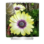 Amazing Daisy  Shower Curtain