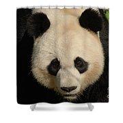 Amazing Face Of A Beautiful Giant Panda Bear Shower Curtain