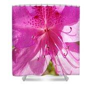 Amazing February 2017 Pink Azalea Shower Curtain