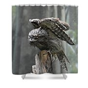 Amazing Frogmouth Bird With His Wings Extended Shower Curtain
