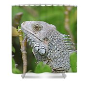 Amazing Gray Iguana Sitting In The Top Of A Bush Shower Curtain