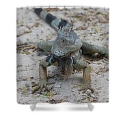 Amazing Iguana With A Striped Tail On A Beach Shower Curtain