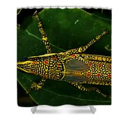 Amazing Insect Shower Curtain