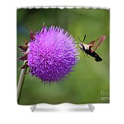 Amazing Insects - Hummingbird Moth Shower Curtain