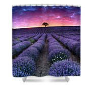 Amazing Lavender Field With A Tree Shower Curtain