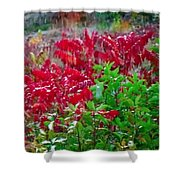 Amazing Nature Blessings Magic Colors Cherry Red Green Shrubs Plants Save  The Environment Shower Curtain