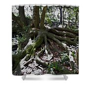 Amazing Roots Shower Curtain