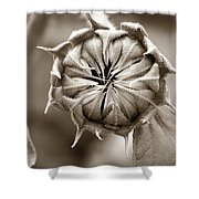 Amazing Sunflower Bud Shower Curtain