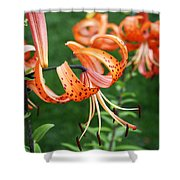 Amazing Tiger Lily Shower Curtain
