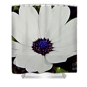 Amazing White African Daisy Shower Curtain