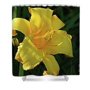Amazing Yellow Lily Flowering In A Garden Shower Curtain